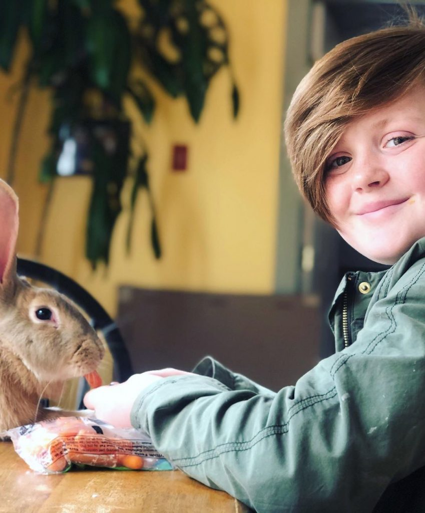 rabbit on table with child