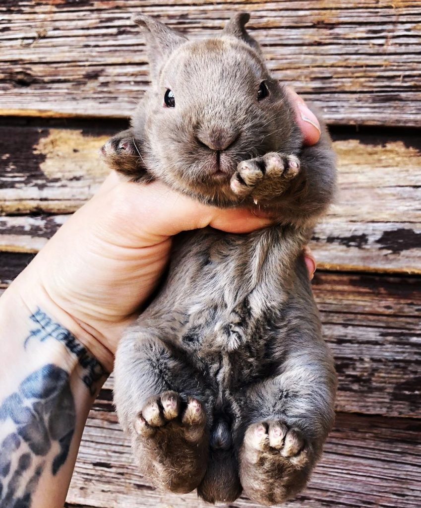 small rabbit in hand