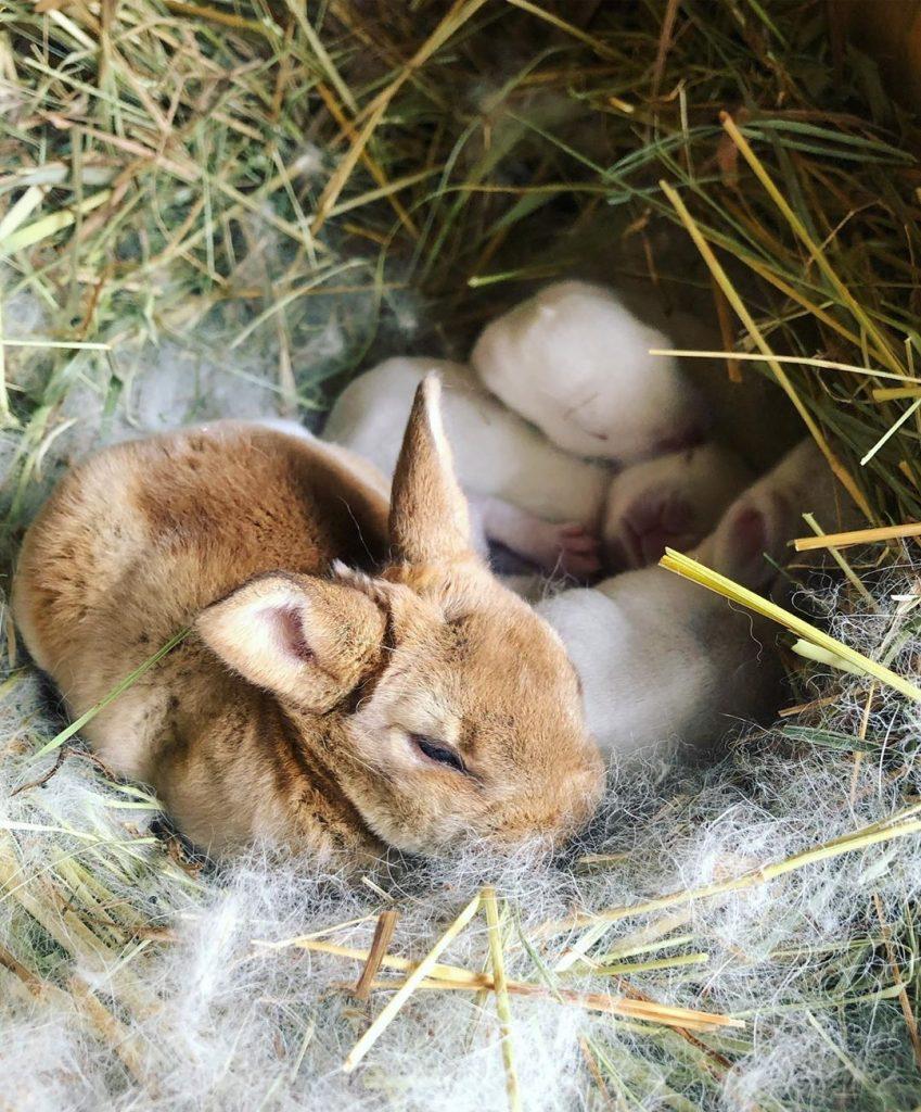 bunny in best