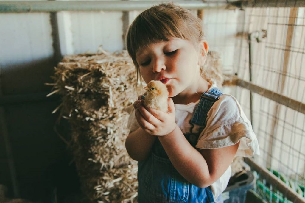 little girl kissing small chick