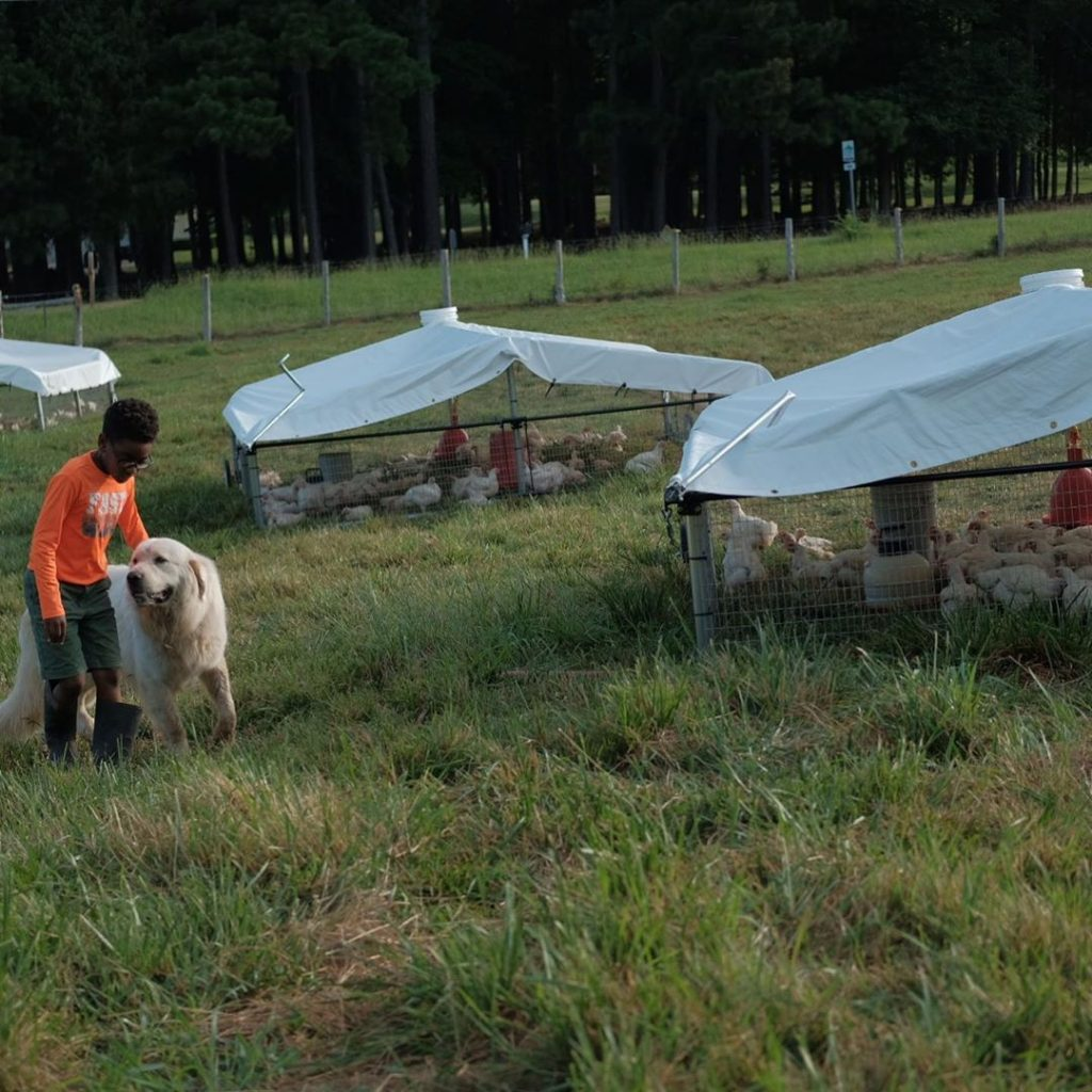 boy with dog and chicken tractors