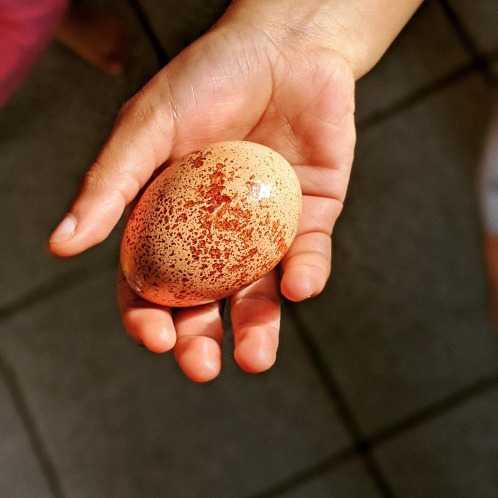 egg in child's hand