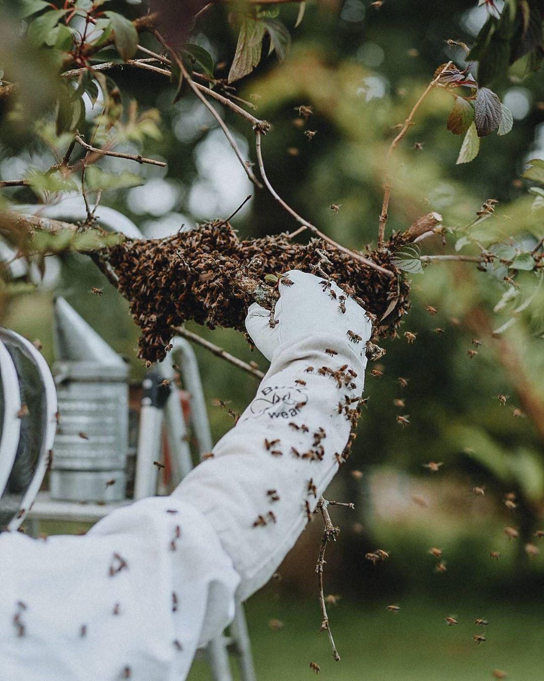 honey bee swarm on arm