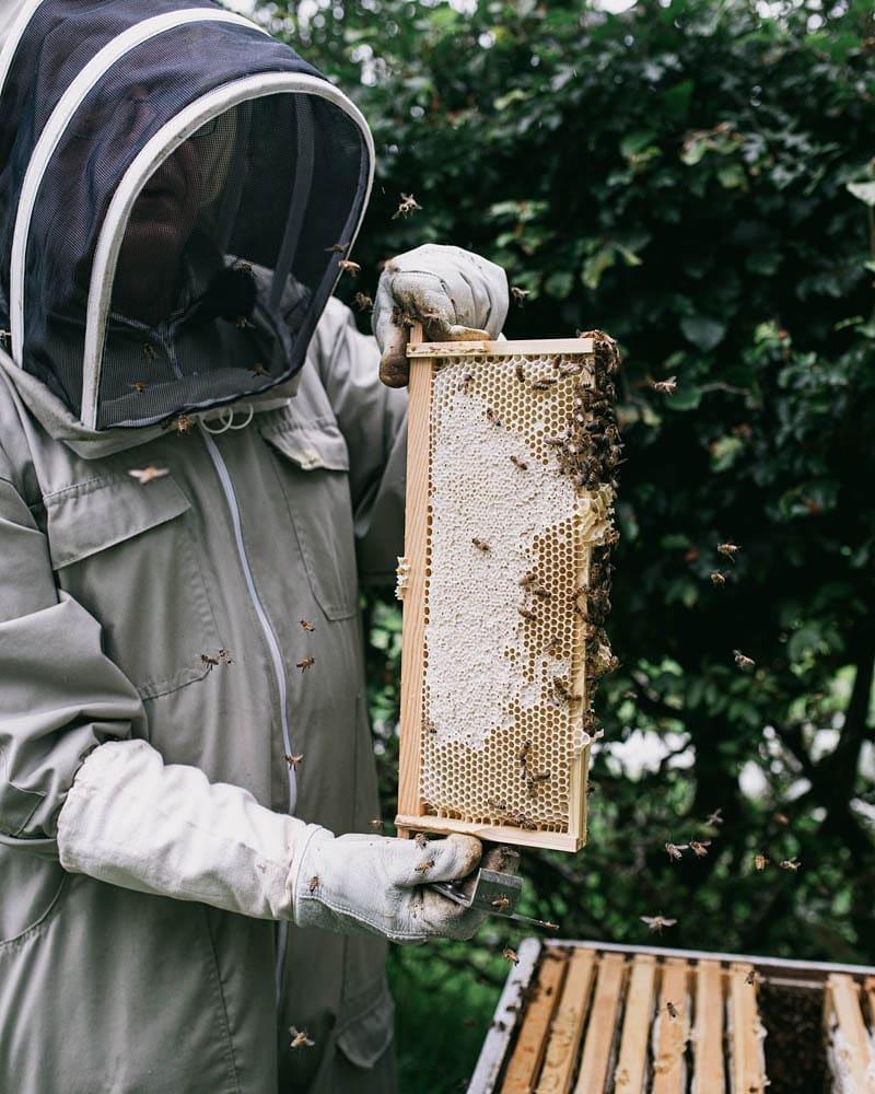 Man in bee suit