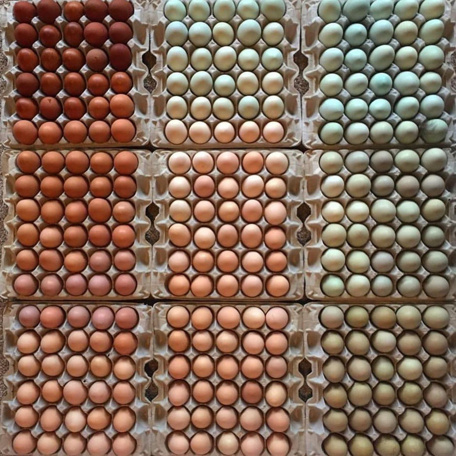 variety egg colors